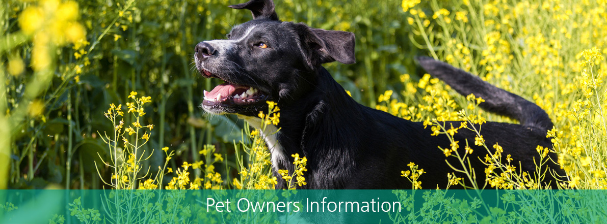 Pet Owners Information