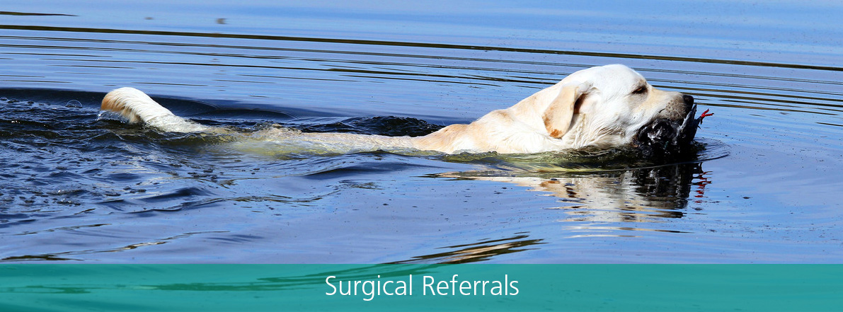 Surgical Referrals
